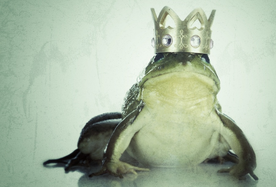 handsome prince - bull frog wearing gold crown looking at viewer