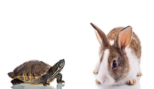 Cute Bunny and Turtle isolated on white background. Concept: Competition